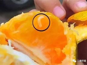 柑橘里发现白色小虫虫,这究竟是怎么回事? 三缘现场处置全记录